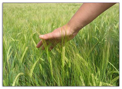 Agrarwissenschaft